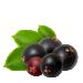 Elderberry - Red
